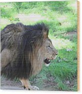 National Zoo - Lion - 01135 Wood Print