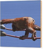 National Zoo - Orangutan - 011317 Wood Print
