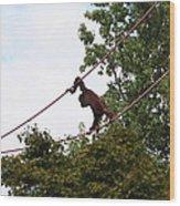 National Zoo - Orangutan - 01135 Wood Print
