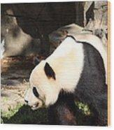 National Zoo - Panda - 011321 Wood Print