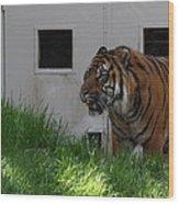 National Zoo - Tiger - 011323 Wood Print