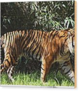 National Zoo - Tiger - 01138 Wood Print