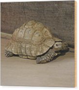National Zoo - Turtle - 12121 Wood Print