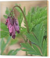 Native Bleeding Hearts Wood Print