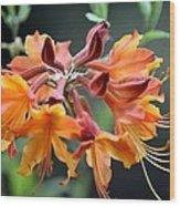 Native Flame Azalea I Wood Print