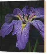 Native Louisiana Iris Wood Print