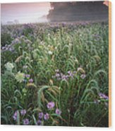 Native Prairie Sunrise Wood Print by Ray Mathis