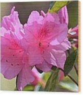 Native Roseshell Azalea Wood Print