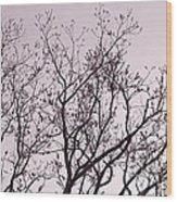 Native Texas Pecan Silhouette Wood Print
