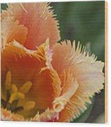 Natural Beauty Wood Print