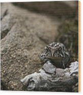 Natural Expression Of A Fowler Toad  Wood Print