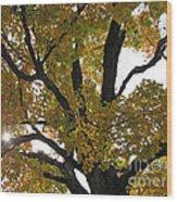 Natural Sunburst Through Autumn Tree Wood Print