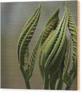 Natural Texture Wood Print