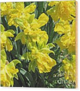 Naturalized Daffodils On The Farm Wood Print