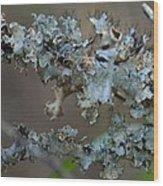 Naturally Abstract Wood Print