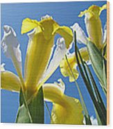 Nature Art Prints Yellow White Irises Flowers Wood Print
