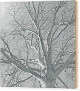 nature - art - Winter Sun  Wood Print