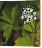 Nature Celebrates Spring With A Burst Of Botanical Fireworks Wood Print
