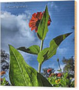 Nature Does Not Hurry Zinnia Standing Tall Wood Print