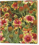 nature - flowers -Blanket Flowers Six -photography Wood Print