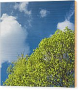Nature In Spring - Bright Green Tree And Blue Sky Wood Print