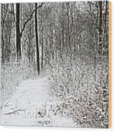 Nature In Winter Under Snow  Wood Print