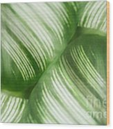 Nature Leaves Abstract In Green 2 Wood Print