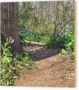 Nature Path Wood Print