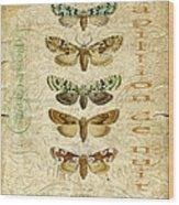 Nature Study-no.3 Wood Print