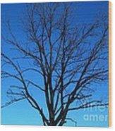 Nature Tree Wood Print