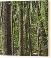 Nature Walk Early Spring Wood Print
