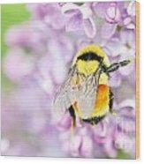 Natures Buzzing Beauty Wood Print