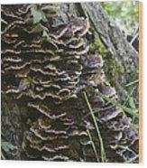 Nature's Castles Wood Print