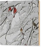 Nature's Christmas Ornaments Wood Print