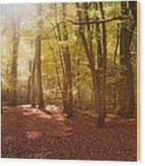 Nature's Light Wood Print