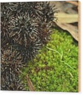 Nature's Moss And Sweetgum Pods Wood Print