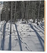 Nature's Path Wood Print