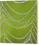 Natures Pearls  Wood Print