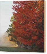 Nature's Red Highlights Wood Print