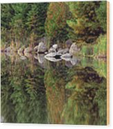 Natures Reflection Wood Print by Mark Papke