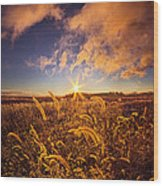 Nature's Romm With A View Wood Print