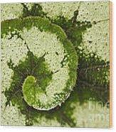 Natures Spiral Wood Print