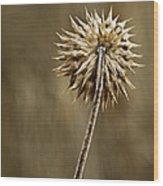 Natures Starburst Wood Print