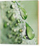 Nature's Teardrops Wood Print