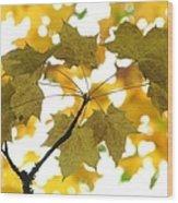 Nature's Umbrella Wood Print