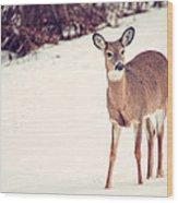 Natures Winter Visit Wood Print