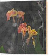 Naturescape 56 B Wood Print
