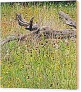 Naturescape Wood Print