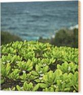 Naupaka Plant Wood Print