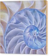 Nautilus Shell Wood Print
